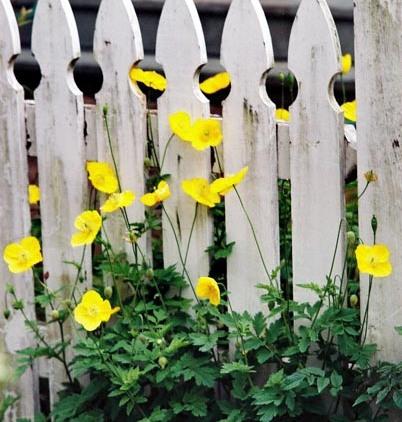 Spring Flowers 31