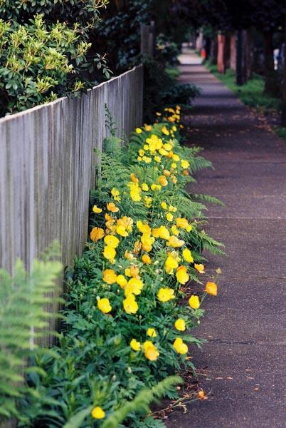 Spring Flowers 32