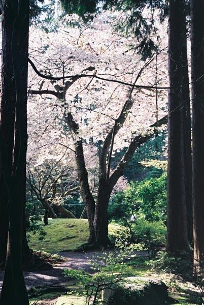 Spring Flowers 35