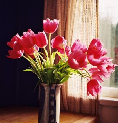 Tulips 18