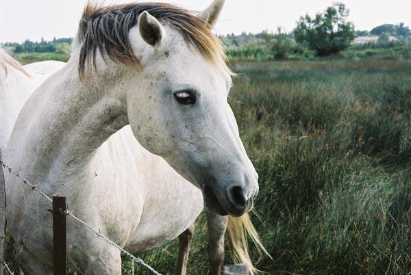 Wolfe Horse BuffaloElk