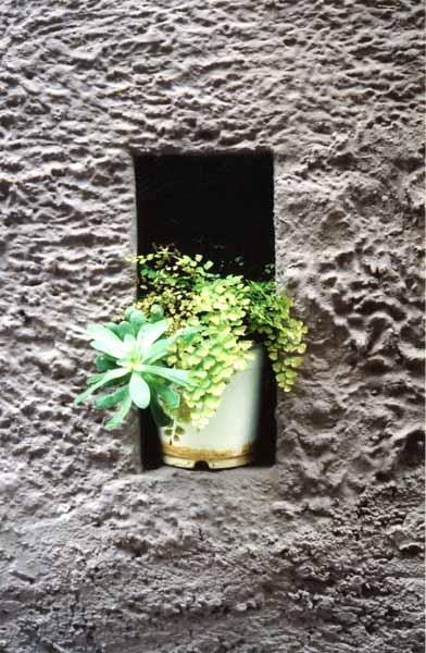 Walls and Windows 176