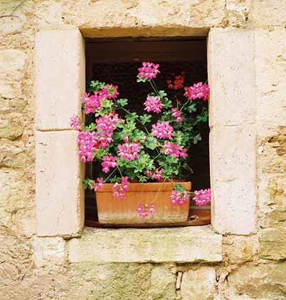 Walls and Windows 195