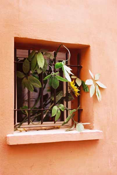 Walls and Windows 207