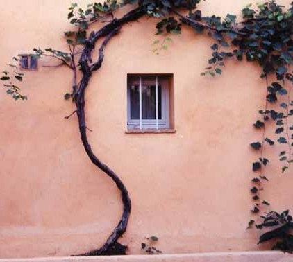 Walls and Windows 221
