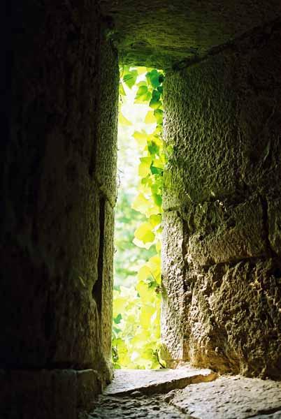 Walls and Windows 241