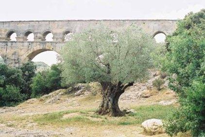 Le Pont du Gard 372