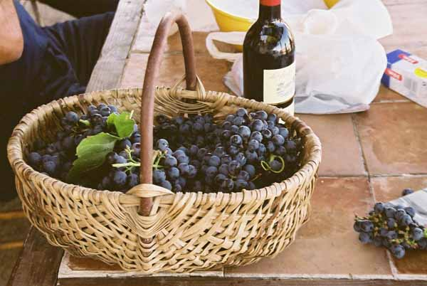Grapes and Wine 512