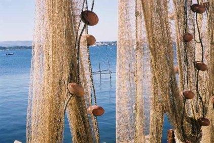 Fishing Nets 623