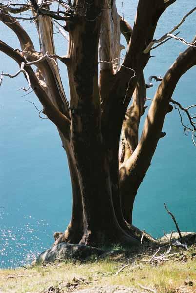 Saturna Island 663