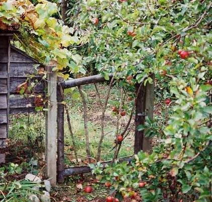 Autumn 794