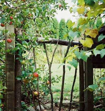 Autumn 795