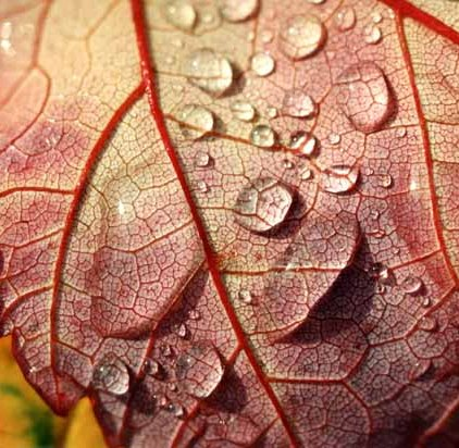 Autumn 810
