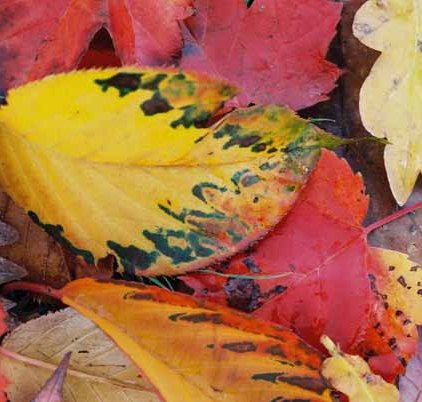 Autumn 811