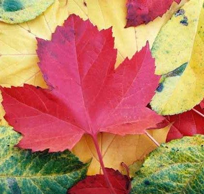 Autumn 812