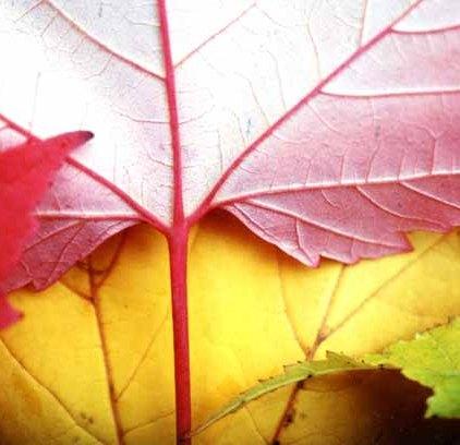 Autumn 813