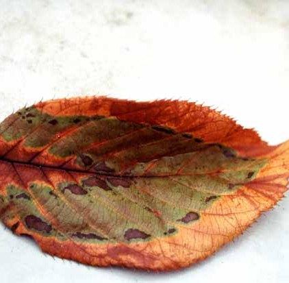 Autumn 814
