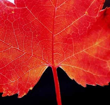 Autumn 816