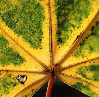 Autumn 817