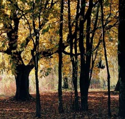 Autumn 826