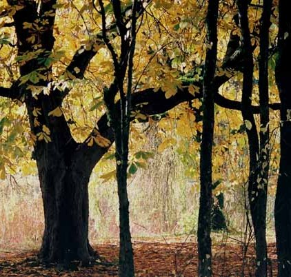 Autumn 827