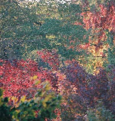 Autumn 829