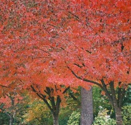 Autumn 832