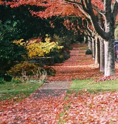 Autumn 833