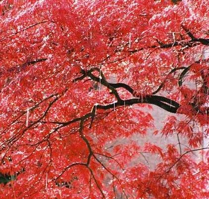 Autumn 835