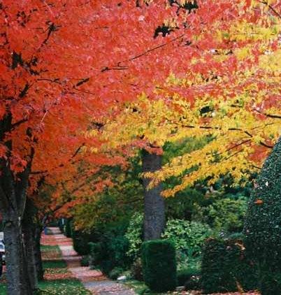 Autumn 836
