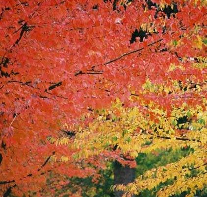 Autumn 837