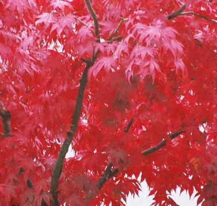 Autumn 838