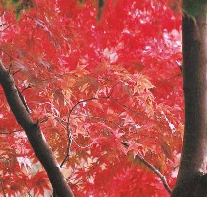 Autumn 839