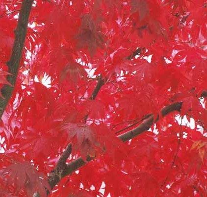 Autumn 840