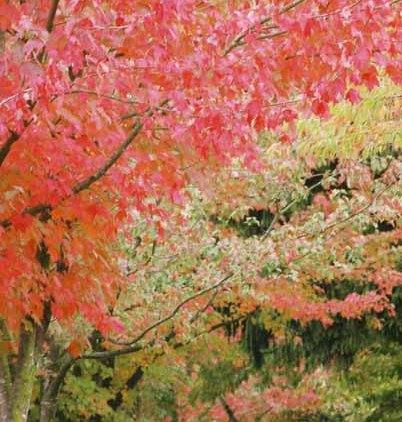 Autumn 841