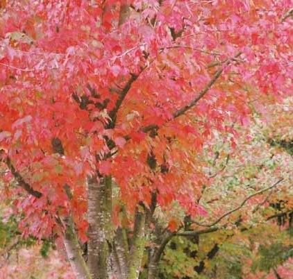 Autumn 842