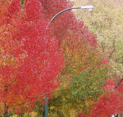 Autumn 843