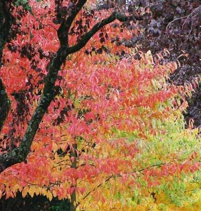 Autumn 844