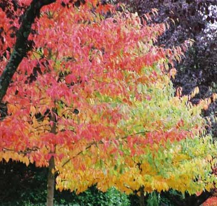 Autumn 845