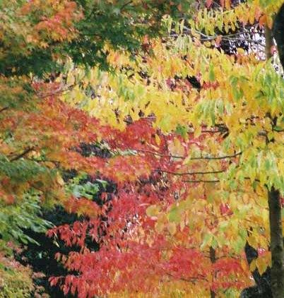 Autumn 846
