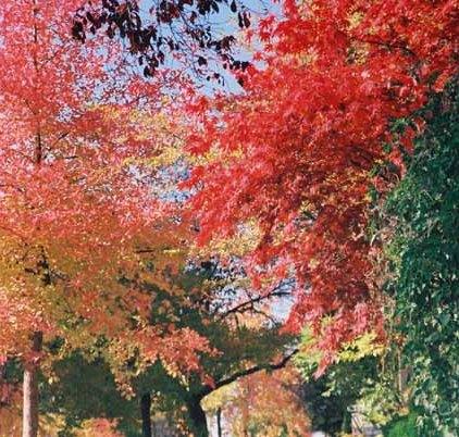 Autumn 847