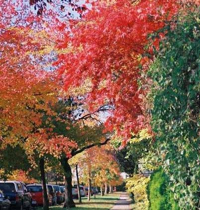 Autumn 848
