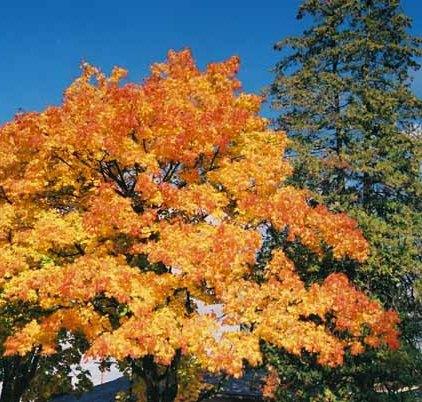 Autumn 849