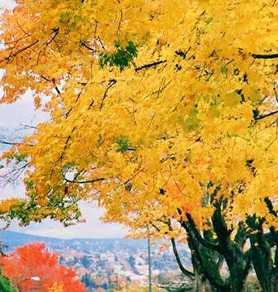 Autumn 850