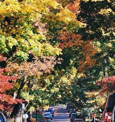 Autumn 851