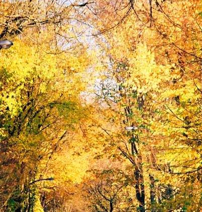 Autumn 852