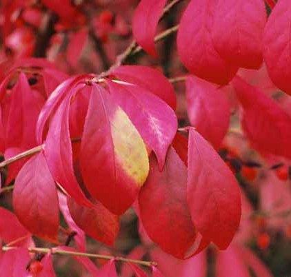 Autumn 853