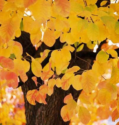 Autumn 854