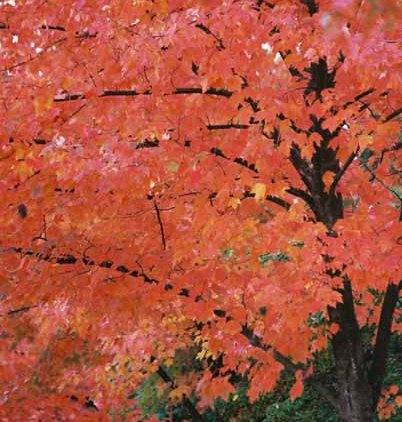 Autumn 855