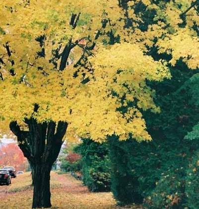 Autumn 856